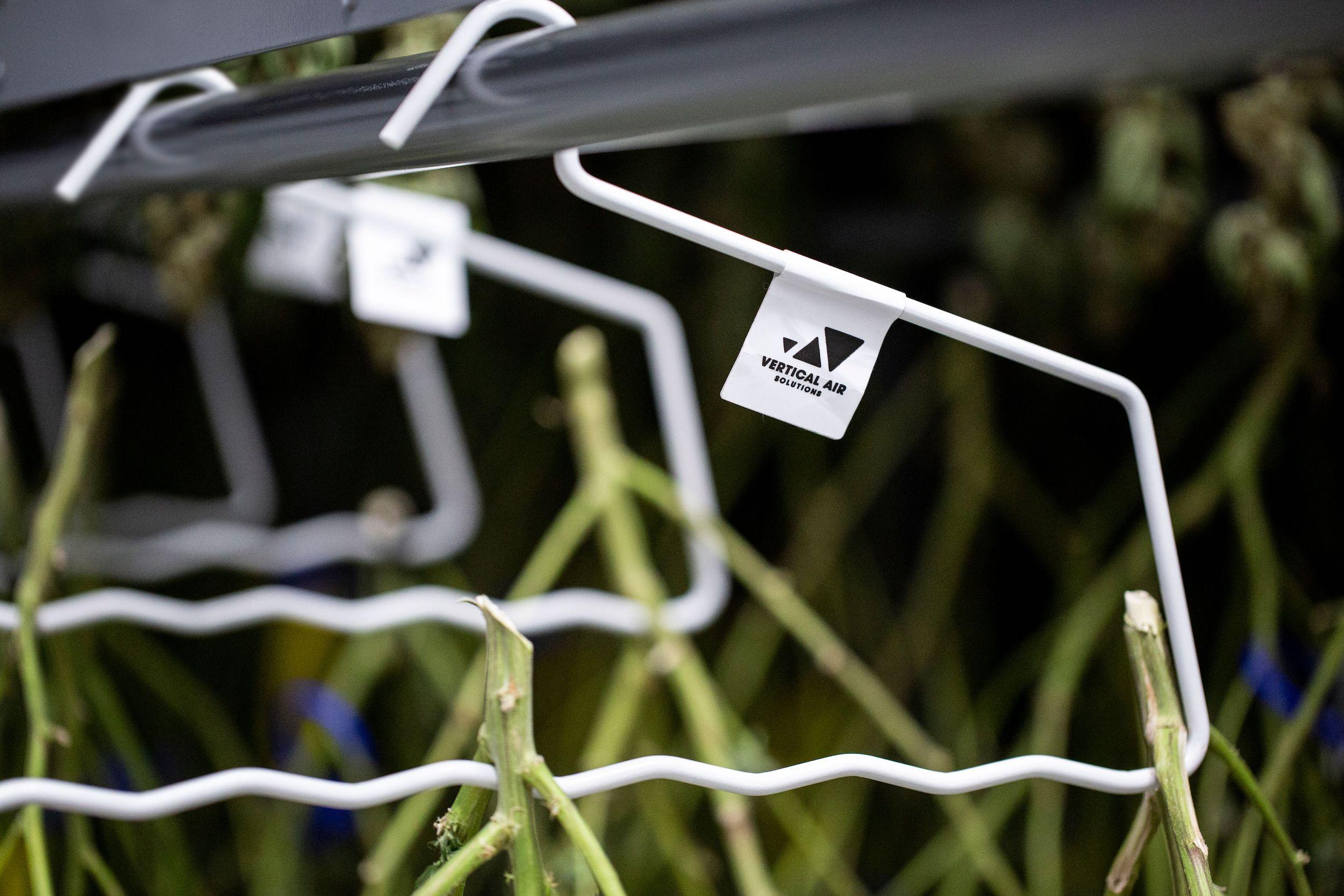 Plant Drying Hangers